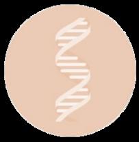 Analyse risques identification phytochimique plantes et recherche adultération